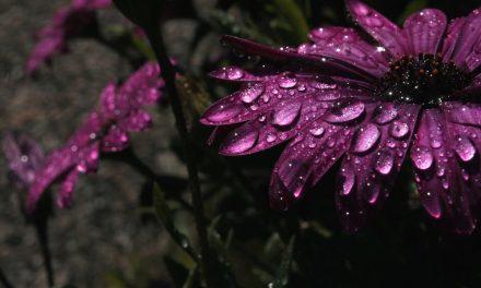 Smeekbede tijdens regen